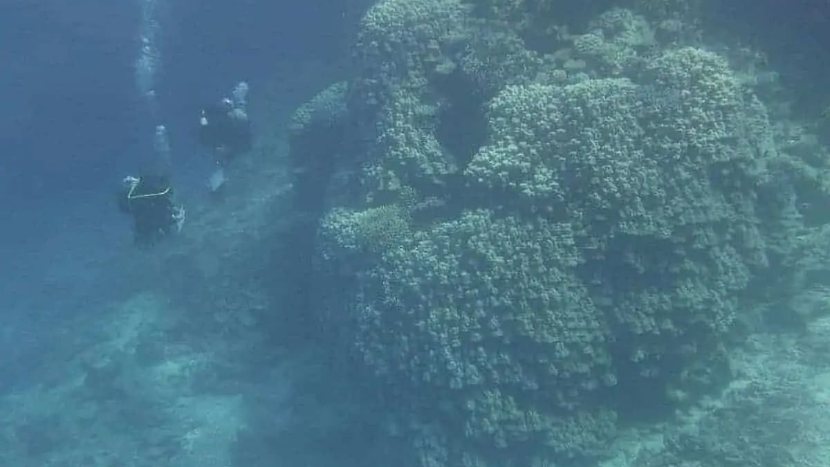 Saudi Arabia discovers new marine creatures, islands north of Red Sea