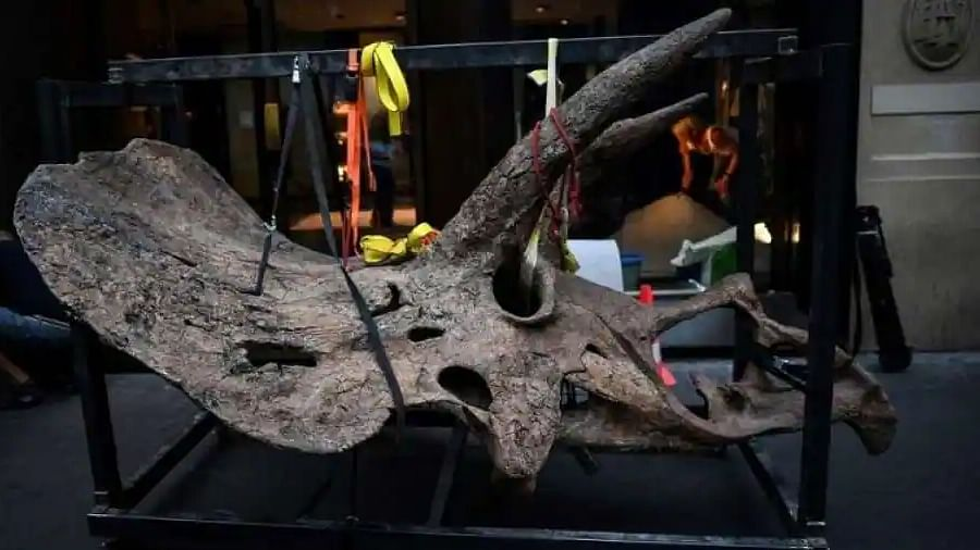 World's largest triceratops, 'Big John,' fetches nearly $8 million in auction