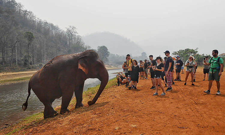 College student crushed to death by elephant while taking selfie in India