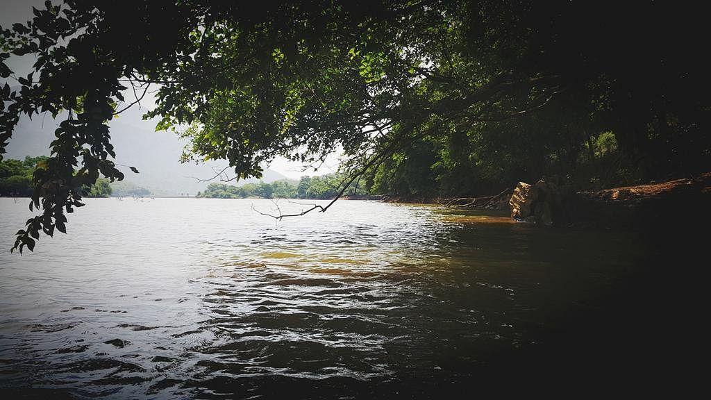 Waste Land ஆக மாறிய Wet Land: கவலையளிக்கும் கோத்தகிரி சதுப்பு நிலங்களின் தற்போதைய நிலை!