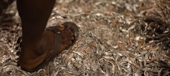 கழிவாகும் மீன்கள்