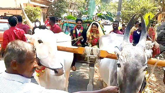 டெல்லி விவசாயிகள் போராட்டத்திற்கு ஆதரவாக மாட்டு வண்டியில் சென்று திருமணம் செய்து கொண்ட காதல் தம்பதியினர்