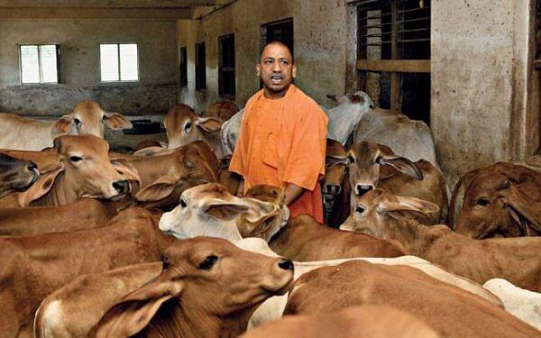 ஆக்சிஜன் இன்றி சாகும் மக்கள்... பசுக்களுக்கு பல்ஸ் ஆக்ஸிமீட்டர் சோதனை... இதுதான் கொரோனா நடவடிக்கையா யோகி?