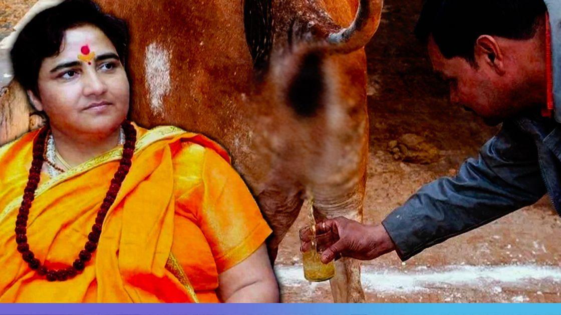 """""""கோமியம் குடி... கொரோனா வராது"""" : மீண்டும் சர்ச்சை கிளப்பிய பா.ஜ.க எம்.பி - மவுனம் காக்கும் மோடி அரசு!"""