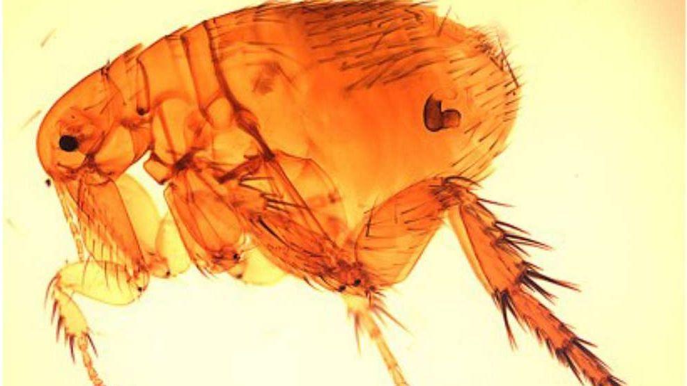 Scrub Typhus: கொரோனாவே இன்னும் ஓயல... அதற்குள் இந்தியாவை அதிரவைக்கும் புதிய வைரஸ் : அச்சத்தில் மக்கள்!