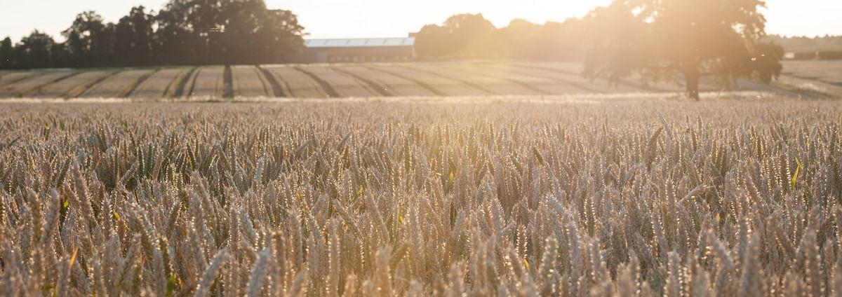 UK Govt backs technology to convert wastewater into fertiliser
