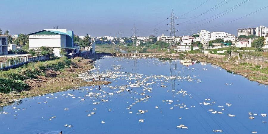 The polluted Cooum river near Madhuravoyal in Chennai.