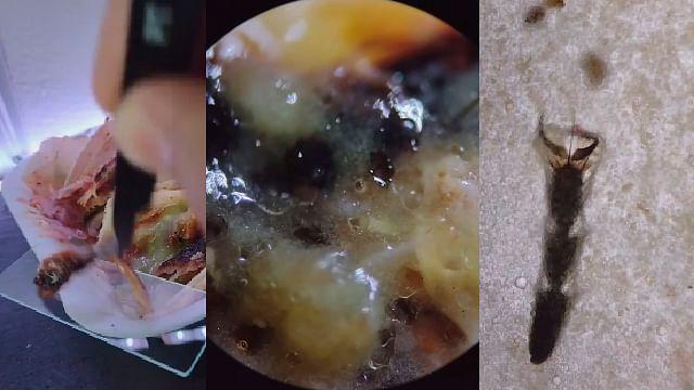 Tiktoker analiza tacos callejeros con microscopio y esto encuentra