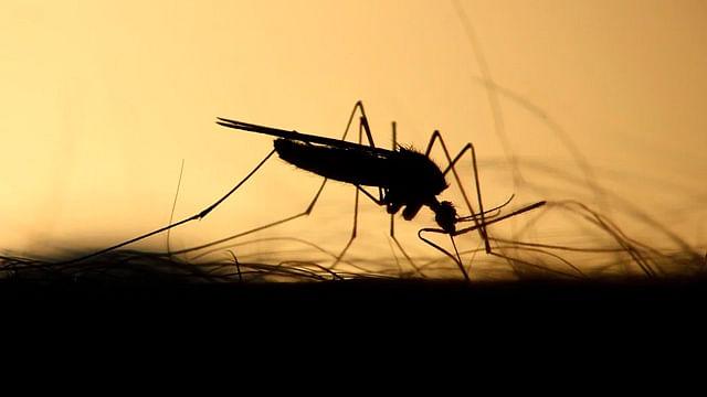 IPN avanza en el desarrollo de la vacuna contra Chikungunya