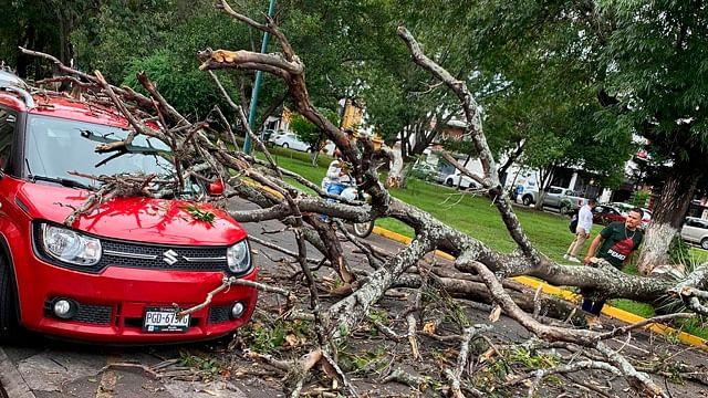 Cae árbol sobre auto en el Boulevard García de León