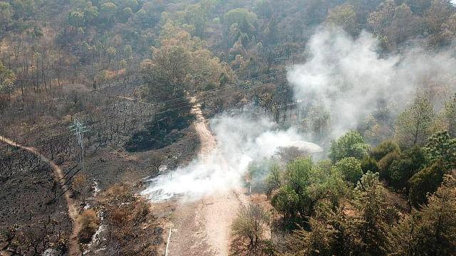 Michoacán pierde al año 54 mil hectáreas de bosque por cambio de uso de suelo
