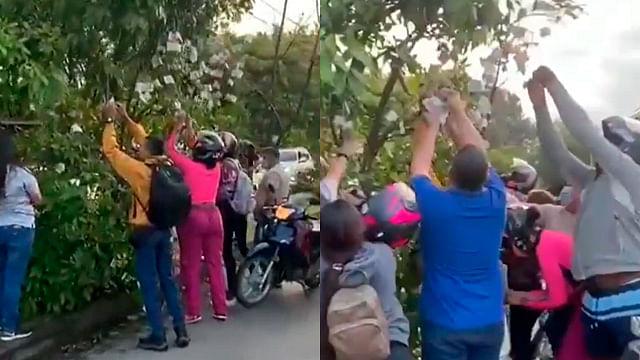 """Ciudadanos hallan """"árbol de billetes"""" y se desata el caos"""