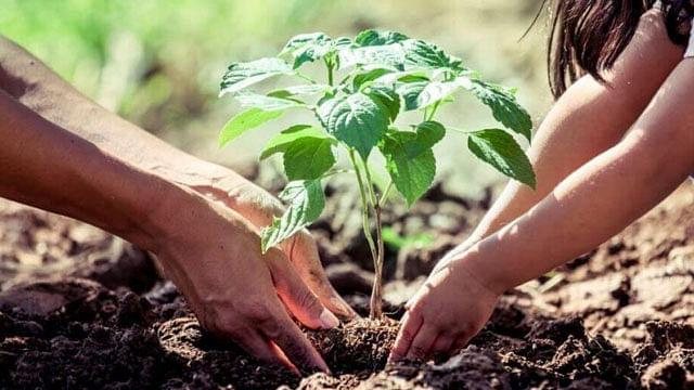 ONU declara el medio ambiente limpio como derecho humano