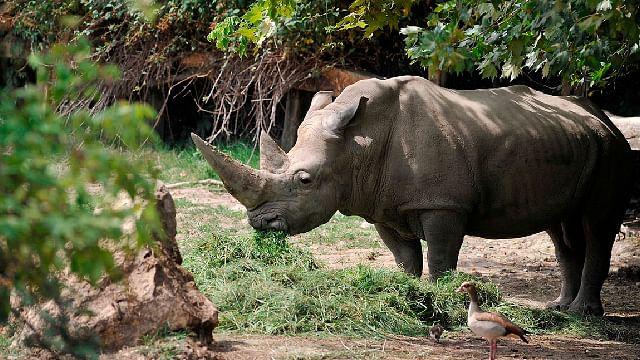 """Muere """"Toby"""" el rinoceronte blanco más longevo del mundo, a los 54 años"""