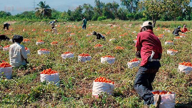 Compromete federación mil 200 mdp para sector agrícola de Michoacán