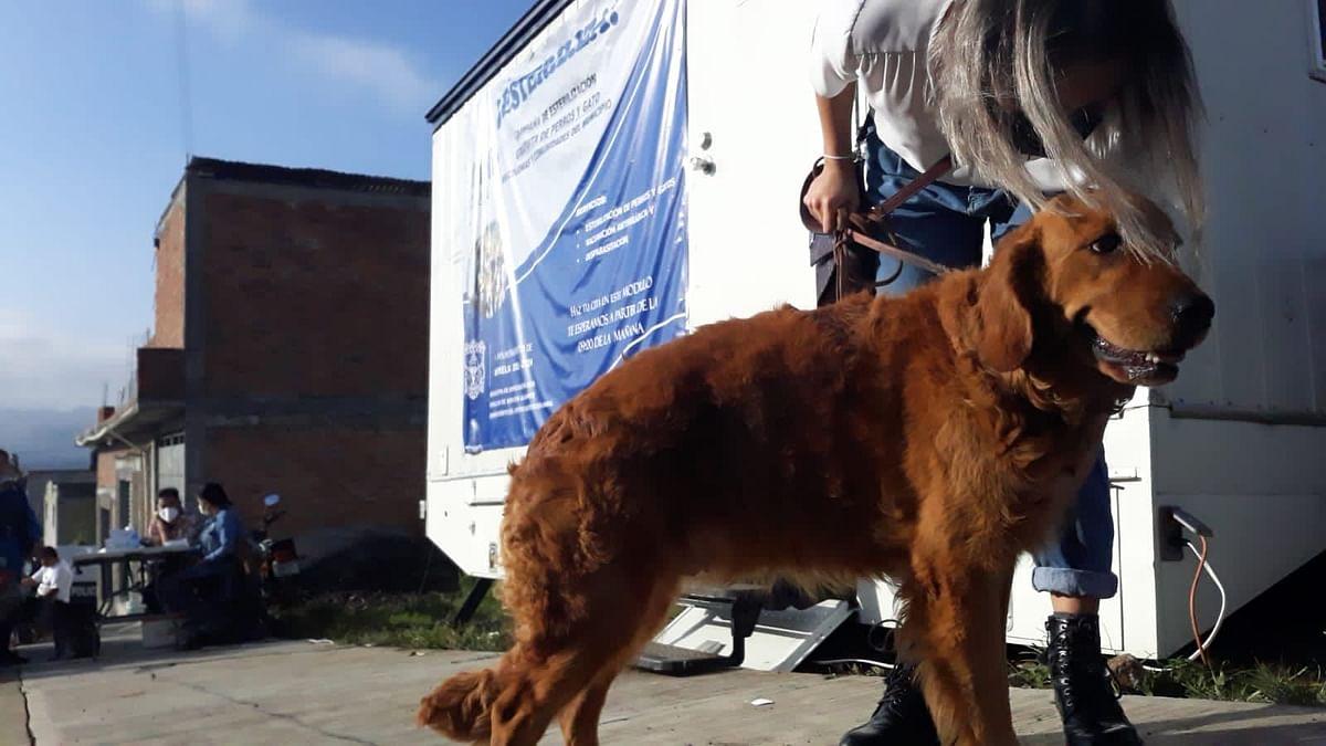 Inicia campaña de esterilización para perros y gatos en Morelia