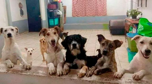 Perritos buscan casa y tú se las puedes dar; ¿cuándo? 16 y 17 de octubre