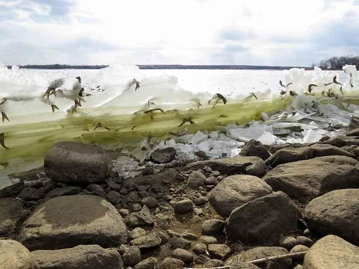 Fotógrafía de peces congelados en pleno salto asombra a científicos