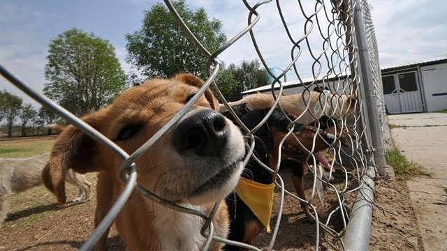 Denuncias por maltrato animal se han incrementado en Morelia durante los últimos meses