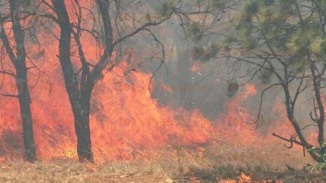 Afectan incendios 8 mil 087 hectáres en Michoacán
