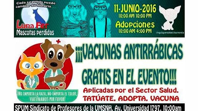 Este sábado habrá feria de adopción canina y felina en CU