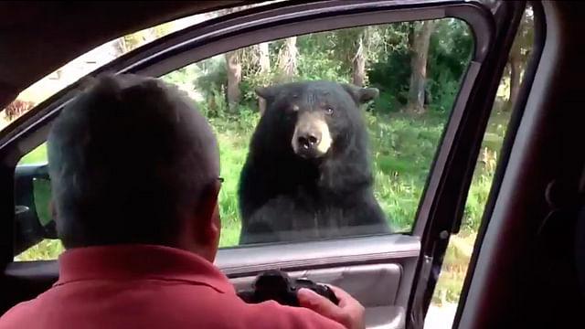 Video: Oso abre la puerta de un coche y da tremendo susto a una familia