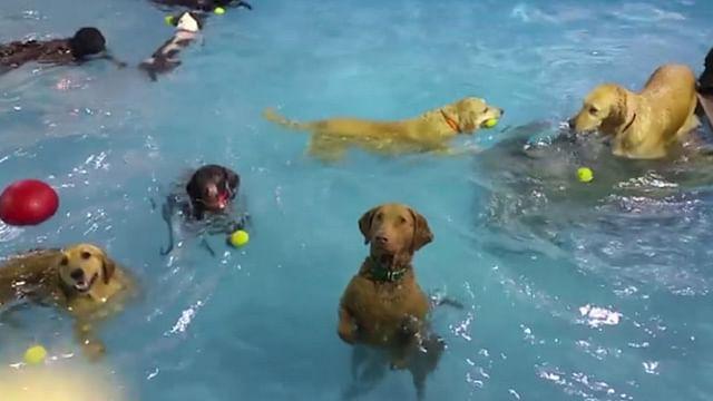 """Video: Surge en redes sociales """"el perro más indiferente del mundo"""""""