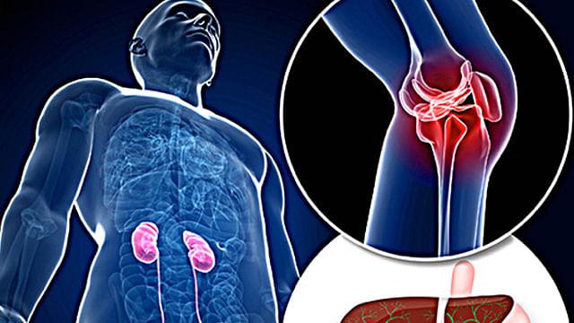 Crean científicos de la UNAM  bioprótesis para regenerar tejidos afectados por traumatismos