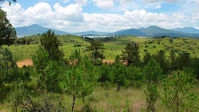 Serán nueve millones de árboles los reforestados en 2018