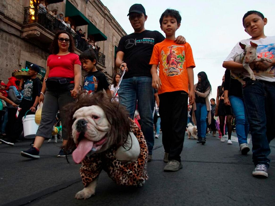 Galería: Con alegría se lleva a cabo el Desfile de Mascotas en Morelia