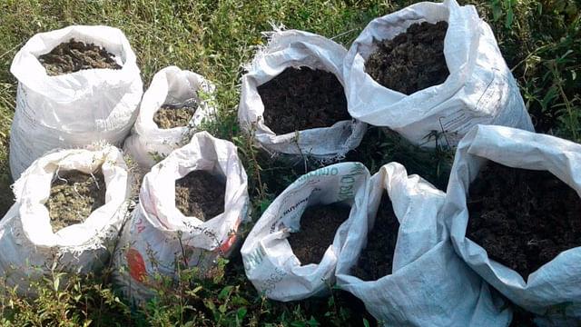 Destruyen SSP y Sedena 405 kilos de marihuana en Tzitzio