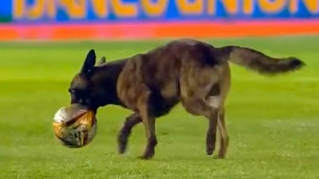 Perro policía se roba el show durante un partido de fútbol