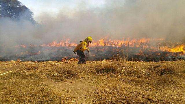 Reporta CNF en Michoacán 292 incendios en primeros meses del año
