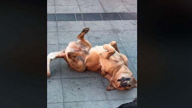 Viral: perrito baila al ritmo de La Bamba veracruzana [VIDEO]