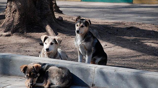 Cámara colocada a perro callejero evidencia abusos y trato indigno (video)