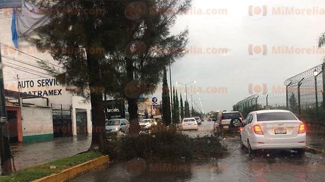 Fuertes vientos y la lluvia derriban ramas en la Avenida Periodismo