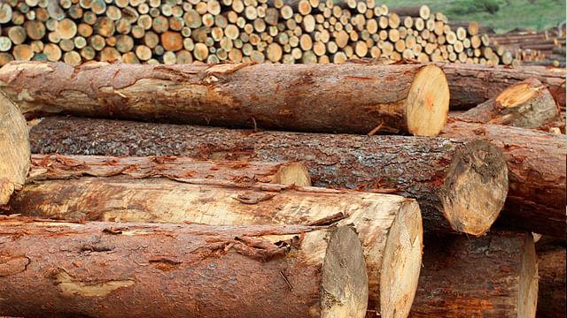 Scribe utilizará madera michoacana para sus productos