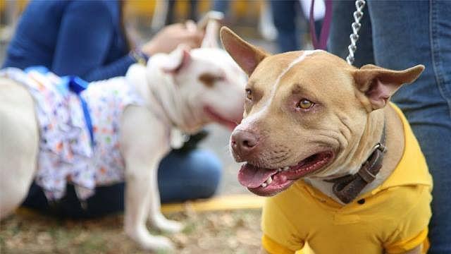 Peleas de perros serán castigadas con cárcel en Yucatán