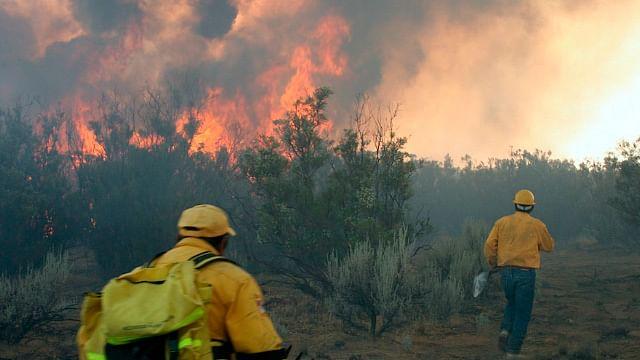 Van 14 incendios forestales en Morelia a consecuencia de cambio de uso de suelo