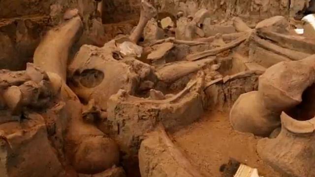 Hallan restos de mamut en basurero, en México