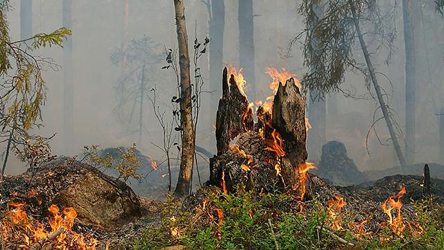 Sin variaciones; Morelia sigue en primer lugar en incendios forestales en 2019