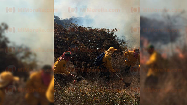 La vegetación que fue alcanzada por el fuego era principalmente pasto seco, diversas hierbas, arbustos y algunos árboles de la zona (Foto: Red 113)