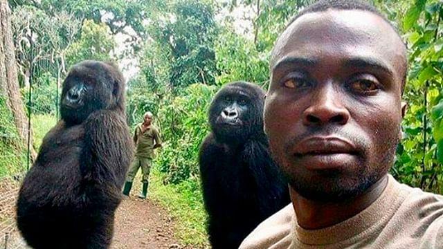 Gorilas posan para selfie junto a hombres, conoce la historia