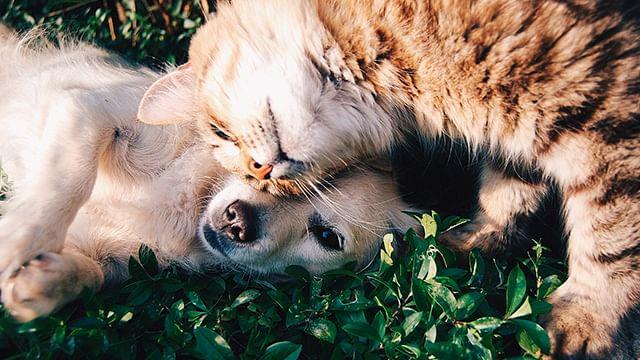 Este domingo habrá Feria de Adopción Canina en Calzada a San Diego