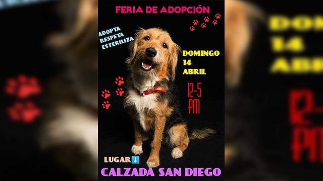 El evento estará a cargo de organizaciones civiles animalistas y rescatistas independientes (foto: cortesía)