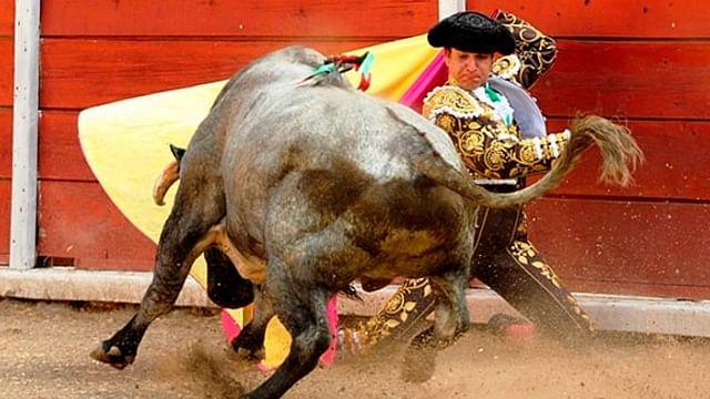 Reactivarían corridas de toros en Guanajuato durante el Festival Cervantino