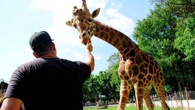 Zoológico de Morelia reabre sus puertas el próximo jueves