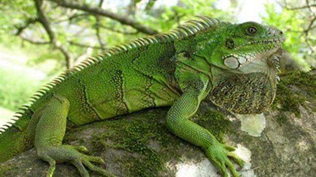 Michoacán, quinto estado con más biodiversidad en México