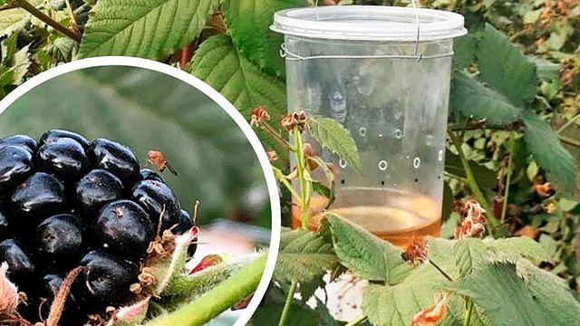 Michoacán lleva a cabo campañas fitosanitarias en el agro
