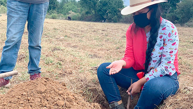 Michoacán multiplica producción de insumos orgánicos